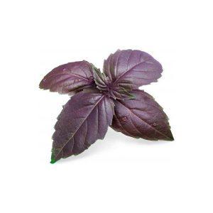 Wkład nasienny Lingot bazylia purpurowa Veritable